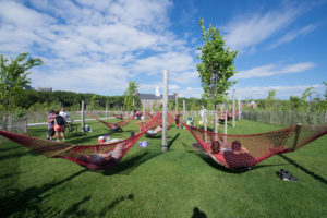 07-Governors-Island-Hammock-Grove-Timothy-Schenck-Photography copy